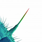 Peter Gabriel: And I'll Scratch Yours - CD