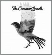 Common Linnets - Plak