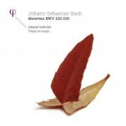 Dorothee Mields, Robin Blaze, Hans-Jörg Mammel, Peter Kooy, Collegium Vocale Gent: Bach: Motetten BWV 225-230 - Plak